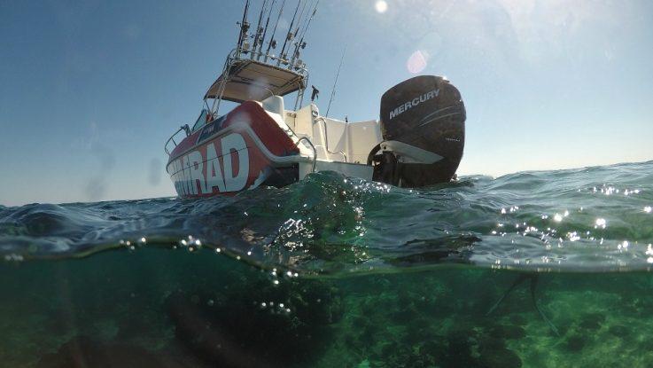 News | Peto Marine - Part 2